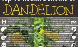 top 10 health benefits of dandelion